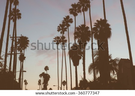 Beverly hills palms silhouette. Concept about California and travels - stock photo