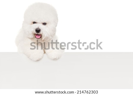 Bichon dog with a sheet of paper - stock photo