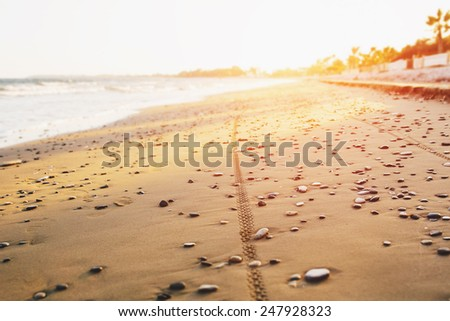 Bicycle tyre tracks on a sandy pebble beach at sunset. Off road cycling. Active life style concept. - stock photo