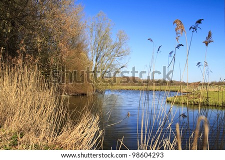 Biesbosch national park in Dordrecht Holland - stock photo