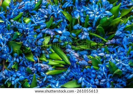 bifolia background flowers - stock photo