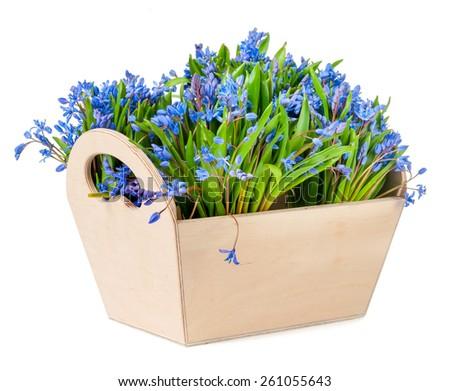 bifolia in box isolated on white background - stock photo