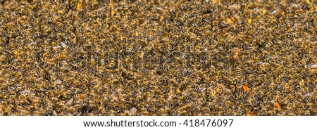 Big and strong bee colony of many thousands of bees from honey bee (Apis mellifera) - stock photo