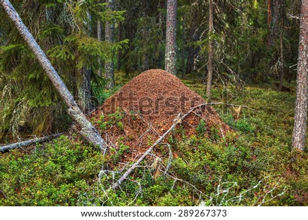 Big anthill in wild forest. - stock photo