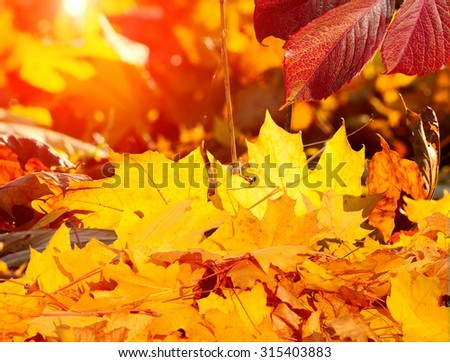 Big autumn oak and grass on a meadow - stock photo