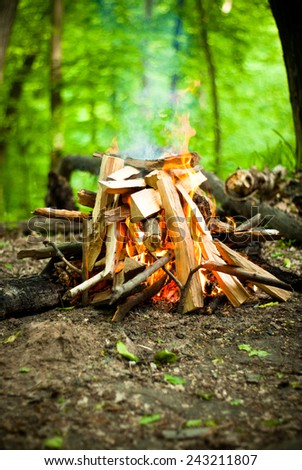 Big beautiful fire in the deep forest - stock photo