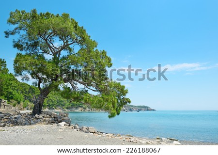Big beautiful tree on the shore of the bay. - stock photo