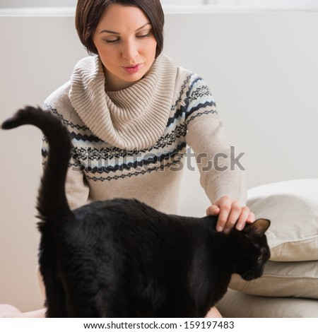 Big black cat comes to its owner to get some tenderness and care. Home comfort - stock photo