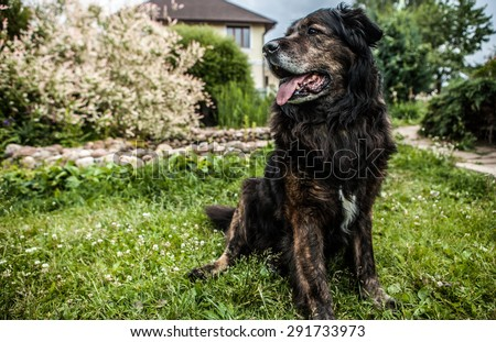 Big black dog rests outdoors. Security sentry Caucasian sheep-dog. - stock photo