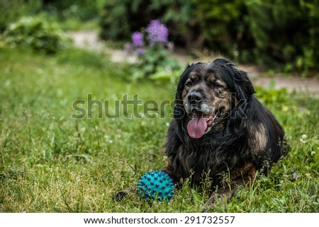 Big black dog rests outdoors with toy ball. Security sentry Caucasian sheep-dog. - stock photo