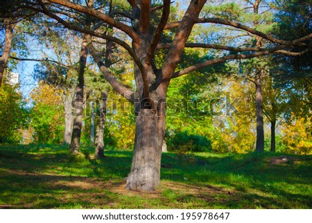 big branchy tree - stock photo