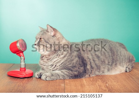 Big British Shorthair cat with retro microphone on wooden table front mint green background - stock photo