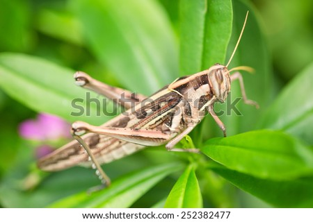 Big brown grasshopper on green top plant - stock photo