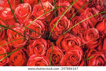 Big bunch of beautiful red roses. A lot of flowers - floral background in retro style tonal correction - stock photo