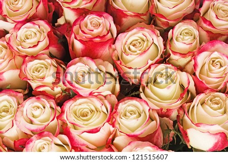 Big bunch of roses - stock photo