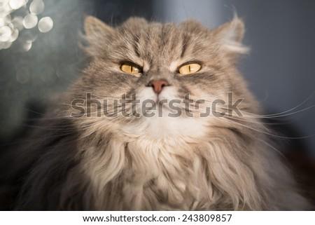 Big Cat - stock photo