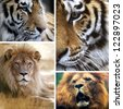 Big cats collage - stock photo