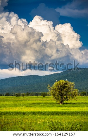 Big clouds over the rice field in countryside of Thailand - stock photo