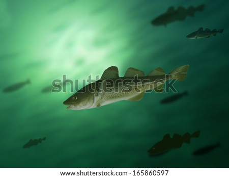 big cod fish and shoal under water - stock photo