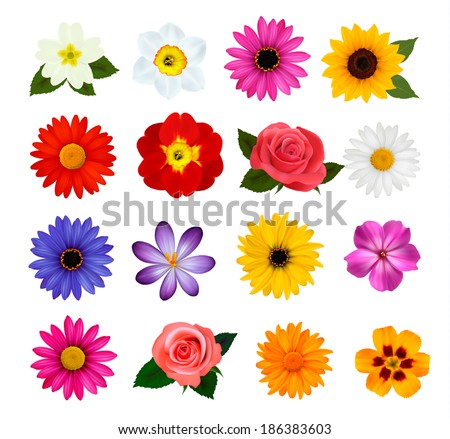 Big collection of colorful flowers. Raster version - stock photo