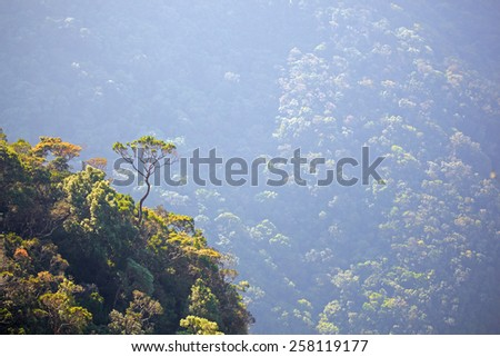Big crooked tree on the edge of a steep mountain slope - stock photo