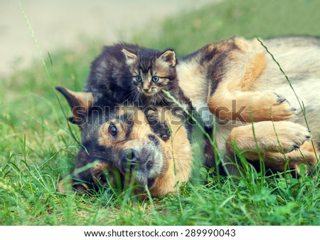 Big dog and little kitten best friends playing together outdoors, lying on the grass. Kitten lying on the dog - stock photo