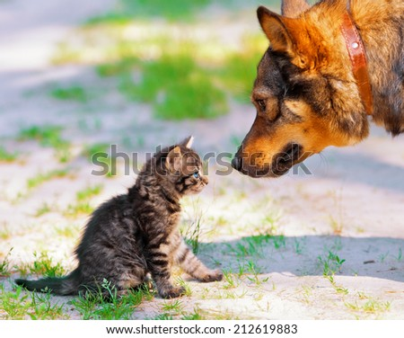 Big dog and little kitten looking at each other - stock photo