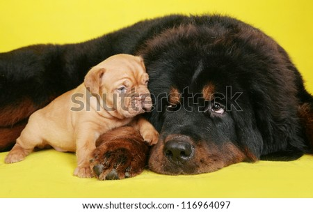 Big dog and puppy on yellow background. - stock photo