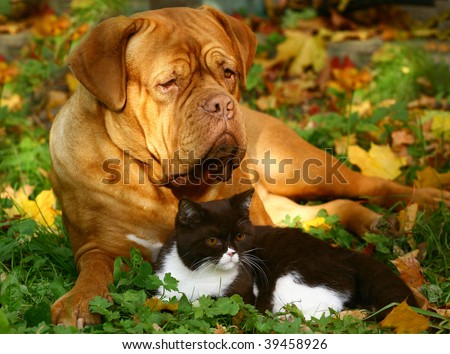 Big dog and small cat. - stock photo