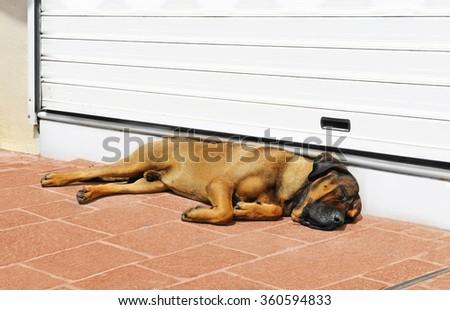 Big dog sleeping at the door on sunny midday - stock photo