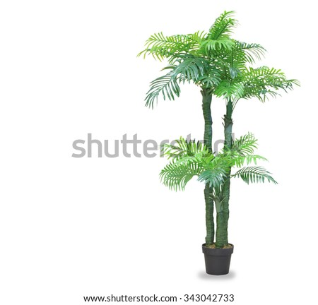 Big dracaena palm in a pot isolated over white - stock photo