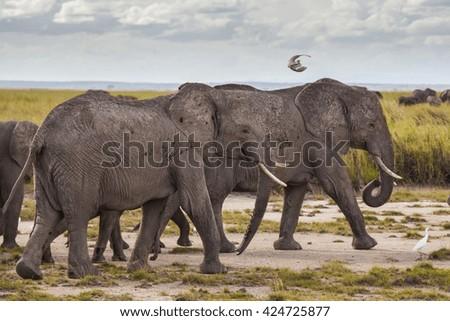 Big elephant in Kenya National Park. Africa. - stock photo