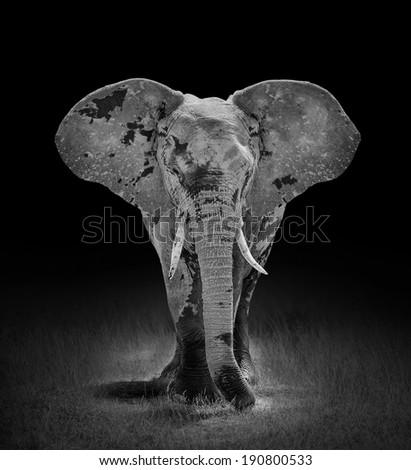 Big elephant with dark background. Kenya, Africa - stock photo