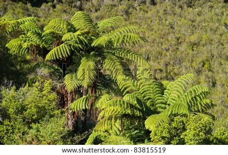 Big fern tree, Abel Tasman, New Zealand - stock photo