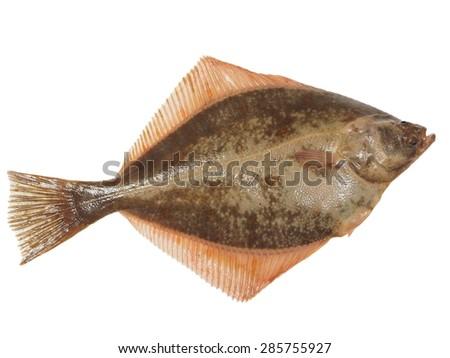 big fish flounder on white background - stock photo
