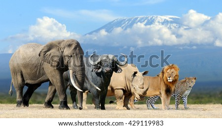 Big five africa - Lion, Elephant, Leopard, Buffalo and Rhinoceros - stock photo