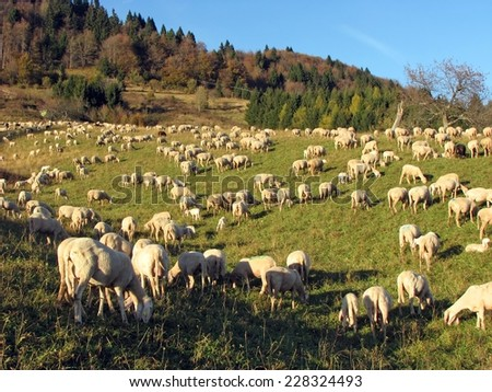 big flock of sheep and goats grazing in the mountains - stock photo
