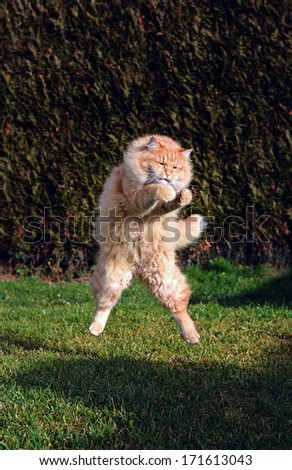 Big funny cat jumping on the garden - stock photo