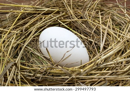 Big Goose fresh egg in a nest of hay. Selective focus - stock photo