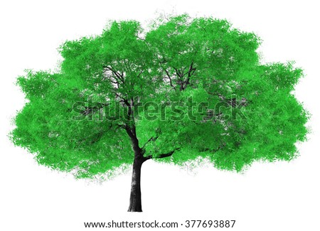 Big green tree isolated on white background - stock photo