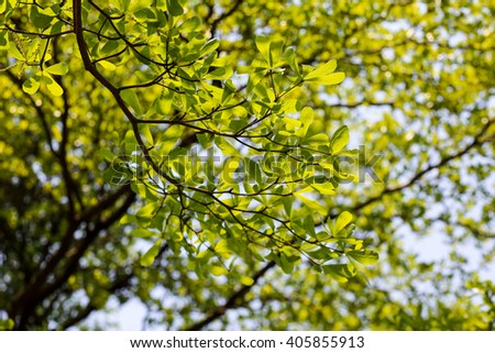 Big green tree with branch magnify - stock photo