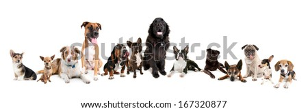 big group of a variety of dogs on white background - stock photo