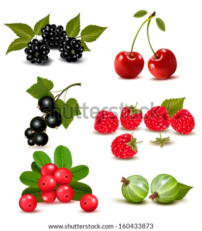 Big group of fresh berries and cherries. Raster version of vector  - stock photo