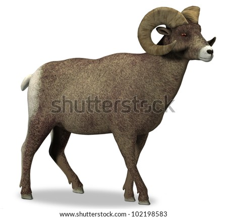 Big Horn Sheep - stock photo