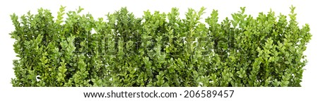 Big Line of the Christmas coniferous evergreen bush branches isolated - stock photo