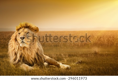 Big male lion lying on the grass - stock photo