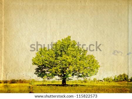 big oak on grunge background - stock photo