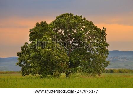 lone oak asian singles Lone oak's best free dating site 100% free online dating for lone oak singles at mingle2  100% free online dating in lone oak, tx  lone oak asian dating .