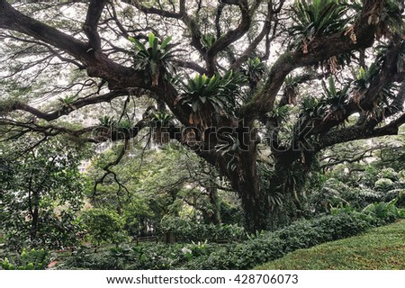Big old green tree in a park, Singapore - stock photo