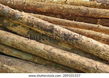 Big Old Pine Wood logs In  Woodpile Background Texture - stock photo